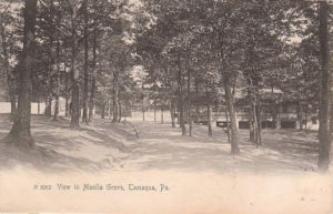 View in Manila Grove circa 1906