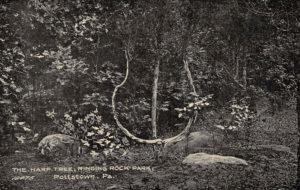 The Harp Tree in Ringing Rocks Park circa 1908